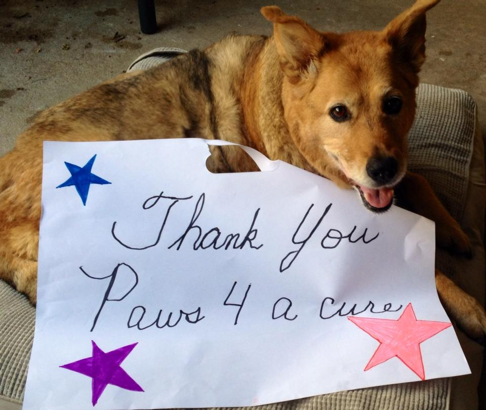 Paws 4 A Cure is an all-volunteer 501(c)(3) nonprofit organization